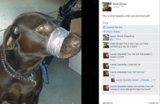 Woman charged after duct-taping a dog's mouth shut and posting picture to Facebook