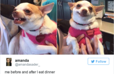 14 tweets about food people who are always hungry will relate to