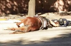 Photo shows officer comforting dying police horse after she was hit by a truck