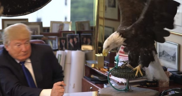 Who wants to see a video of Donald Trump cowering in front of a bald eagle?