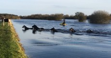 WATCH: Dramatic rescue of flood-stricken horses from the River Shannon