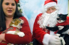 People are taking their cats to see Santa and the results are glorious