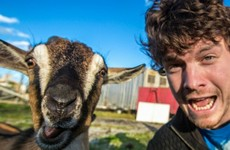 This Irish guy has gone viral thanks to his brilliant animal selfies