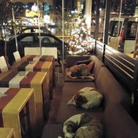 This cafe is letting stray dogs shelter from the cold at night