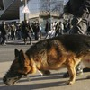 Police dog killed during French terror raid to be awarded bravery medal