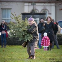 Could you break the Irish record for how far you can throw a Christmas tree?