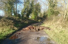 Woman finds horses disemboweled and skinned at the end of her driveway