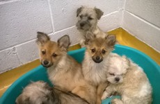18 pups found in car boot at Dublin Port, one fighting for his life