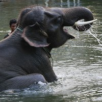 Woman killed and baby injured after being trampled by wild elephant