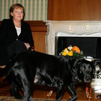 Putin denies trying to scare Angela Merkel with his dog