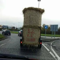 17 things that could only happen in the Irish countryside