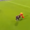 Supporter gets cleaned out while attempting to tackle mascot at Leinster schools match