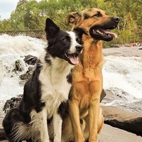 The internet has fallen in love with these two dogs who are best friends
