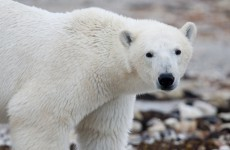 Climate change is 'shrinking' animals