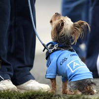 Dublin dogs and January trophies - the best pictures from the GAA weekend
