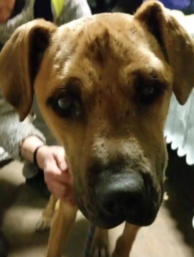 Dog blind and fighting for life after being shot with pellet gun