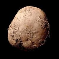 Businessman pays €1m for photograph of Irish potato