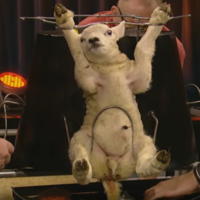 Almost 90 complaints made about Late Late Show 'Lamb Carousel'