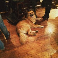 A Dublin pub has been told to stop letting dogs in