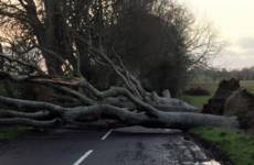 Storm Gertrude rips down trees at Game of Thrones' Dark Hedges
