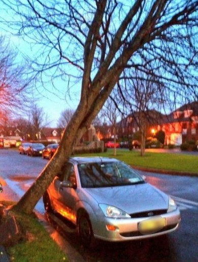 The wind ripped up a tree in Dublin last night... and dumped it on a car