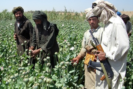 File photo of farmers collecting resin from opium poppies in the Helmand province of Afghanistan.