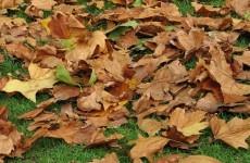 WATCH: Nationwide photographs of an Irish autumn