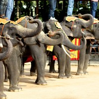 British tourist trampled to death by elephant in Thailand