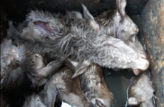 Outrage as severed heads of deer found in Killarney bin