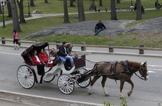 Getting a horse-drawn carriage around New York could become a thing of the past