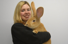 Take a break and check out this rabbit the size of a dog