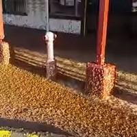 VIDEO: Swarm of moths invades town in Australia