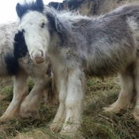 Ponies rescued after becoming stranded on Waterford cliff
