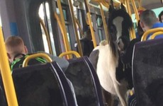 11 things that could only happen on the Luas