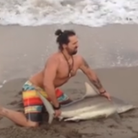 Man pulls shark from the sea to take photos with it