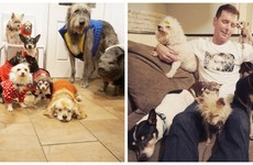 This guy with nine elderly rescue dogs and a pig is the best thing on Instagram