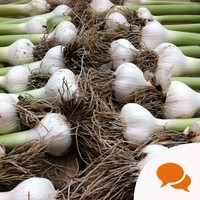Vitamins in garlic help your body fight carcinogens and get rid of toxins
