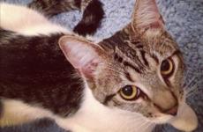 Irish banker arrested over allegations of torturing roommate's cat