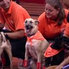 These adorable stray dogs were trained to fetch balls at tennis matches