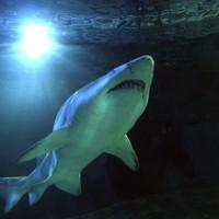 Australia is now using drones to help stop shark attacks