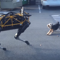 Turns out real dogs don't really like Google's robotic dogs