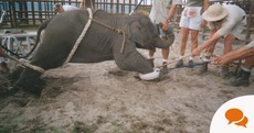 The show must not go on – the time to ban wild animals from circuses is now