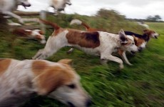 Hundreds sign petition protesting against fox-hunting internship on JobBridge