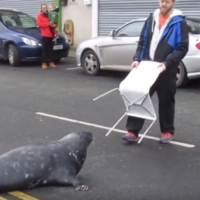 Wicklow's infamous Sammy the Seal is going viral all over the world