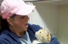 Missing airport cat found - and homeward bound