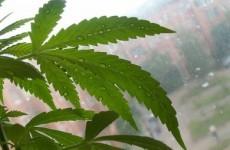 Cannabis plants worth €400,000 seized by Gardaí