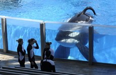 SeaWorld is ending its killer whale shows