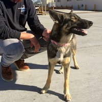 This amazing dog fell off a fishing boat but was found alive five weeks later