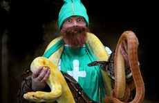 "What would happen if snakes were brought ""back"" to Ireland?"