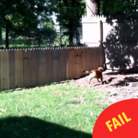 This man built a fence to keep his dog in the yard, but there's just one problem...